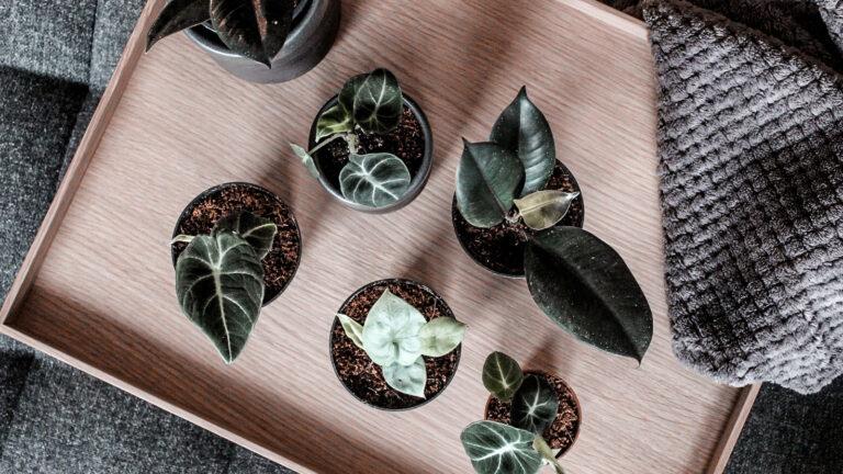 3x nieuwe stekjes van Plantrebelz.nl !